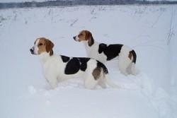 Как и чем утеплить будку для собаки на зиму: материалы, инструменты и краткая инструкция